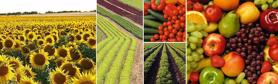 comercialización de productos químicos orgánicos e inorgánicos