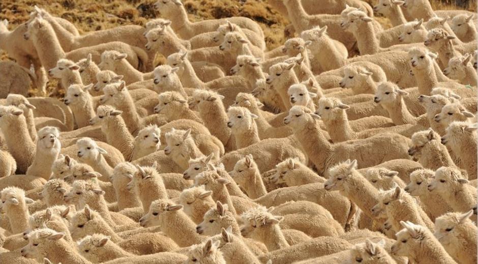 Hilados de alpacas, throws - Agua y Manto