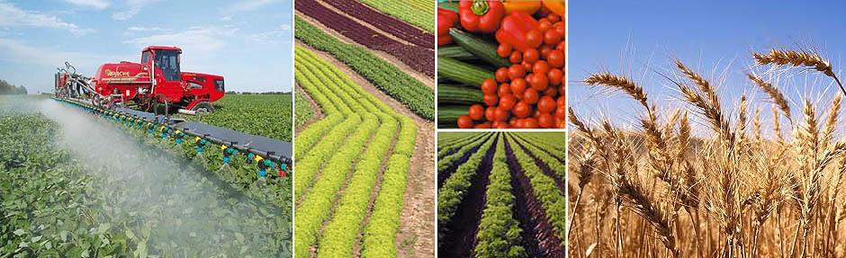 marketing of organic and inorganic chemicals